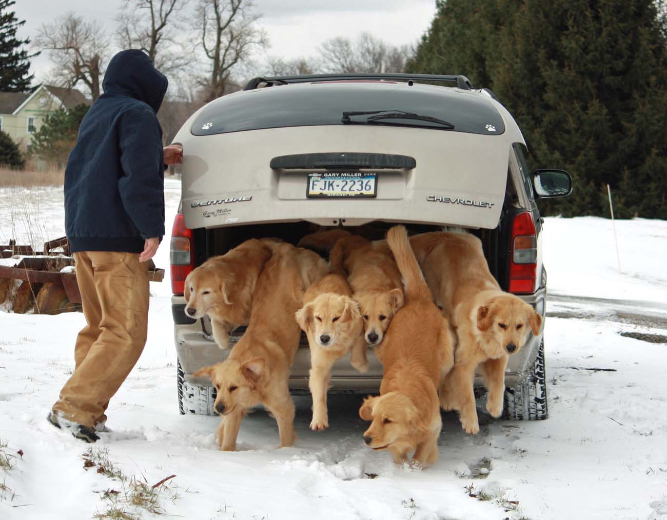 Harborview Golden Retrievers | Golden Retrievers, Puppies ...