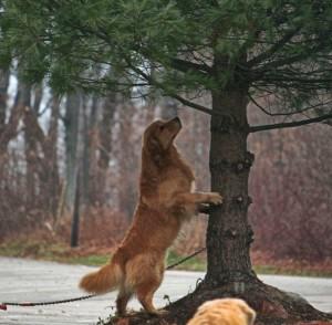 Detour tree